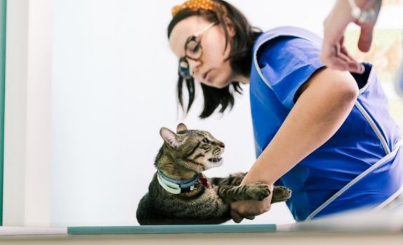 Image of a cat and vet